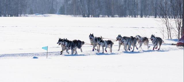 Paseo en trineo de perros por Grandvalira