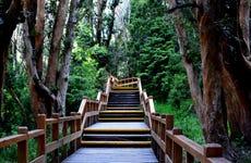 Excursión a Isla Victoria y Bosque de Arrayanes