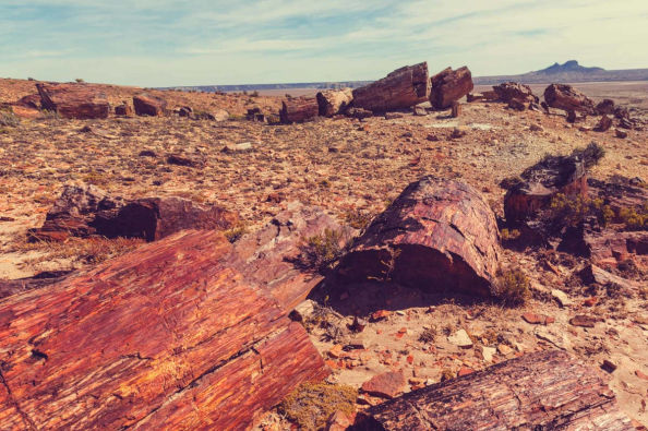 The Petrified Forest of Barreal