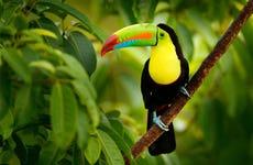 Excursão ao Bioparque Temaikèn