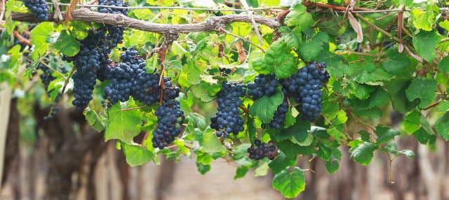 Tour del vino por Cafayate