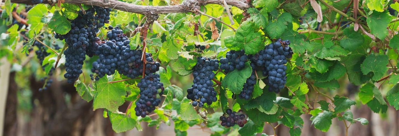 Tour do vinho por Cafayate