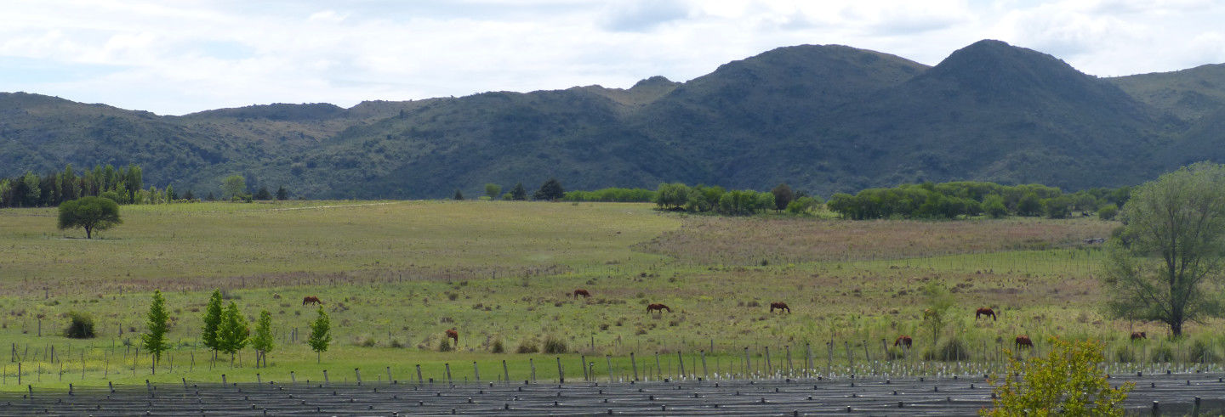 Valle de Calamuchita Winery Tour