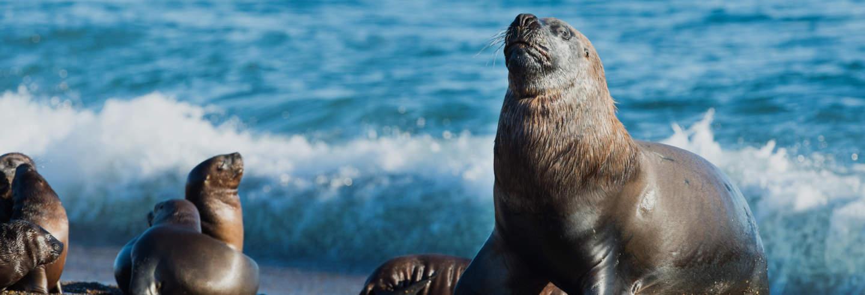 Visite dans Las Grutas + Snorkeling à Punta Perdices