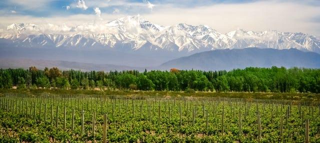 Tour de viñedos y bodegas
