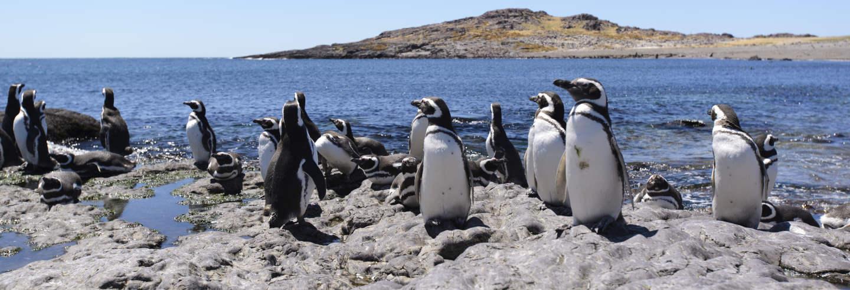 Excursão à ilha Pingüino