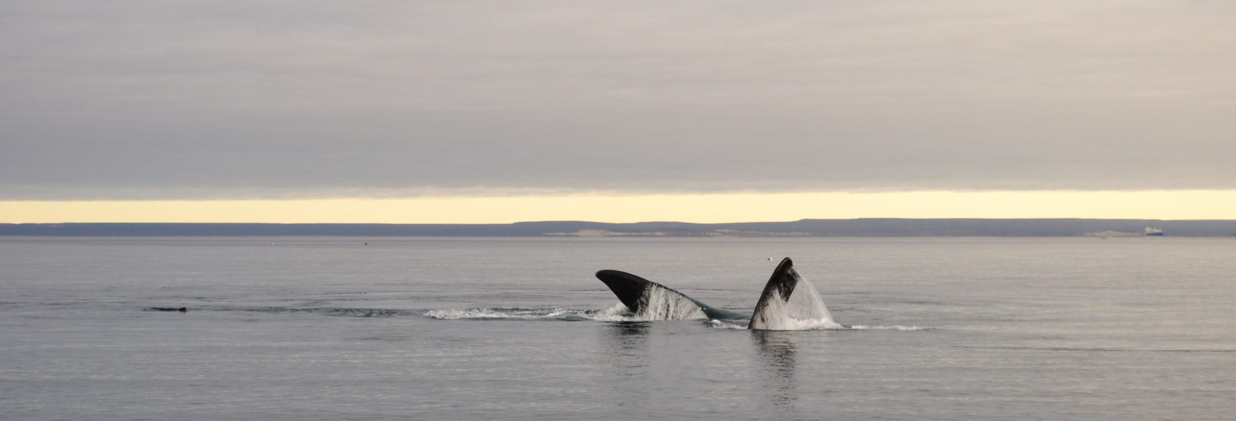 Avistamento de baleias em El Doradillo