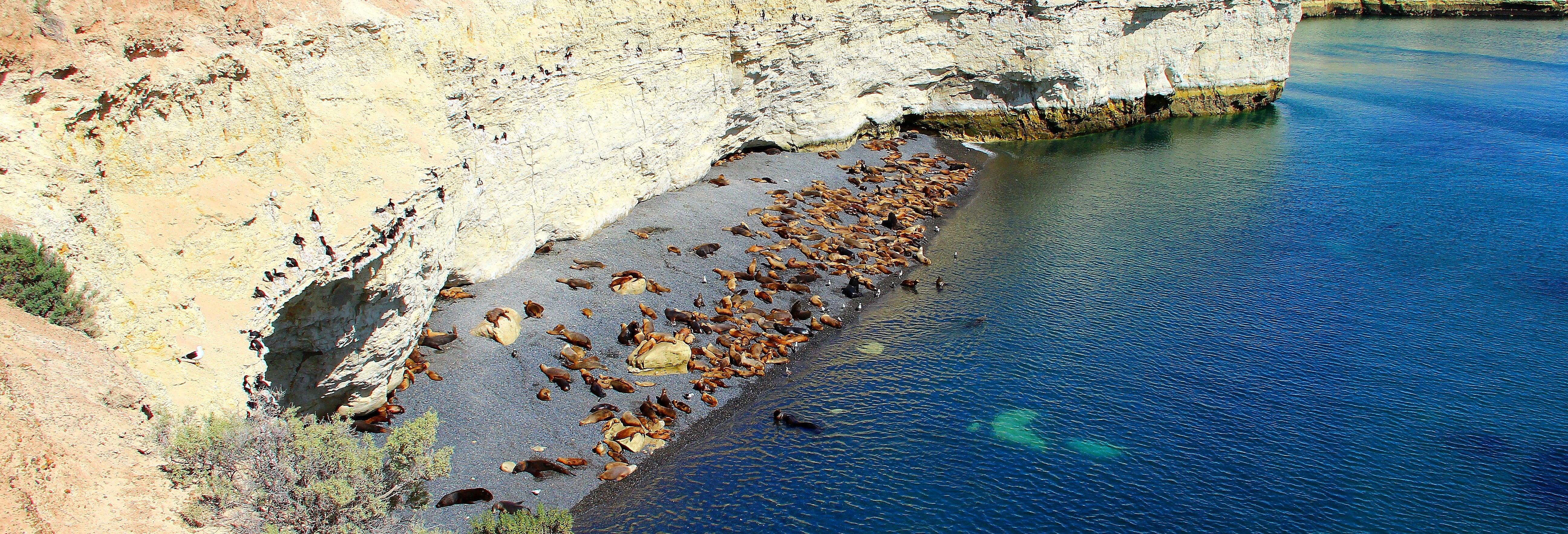 Punta Loma Sea Lion Tour
