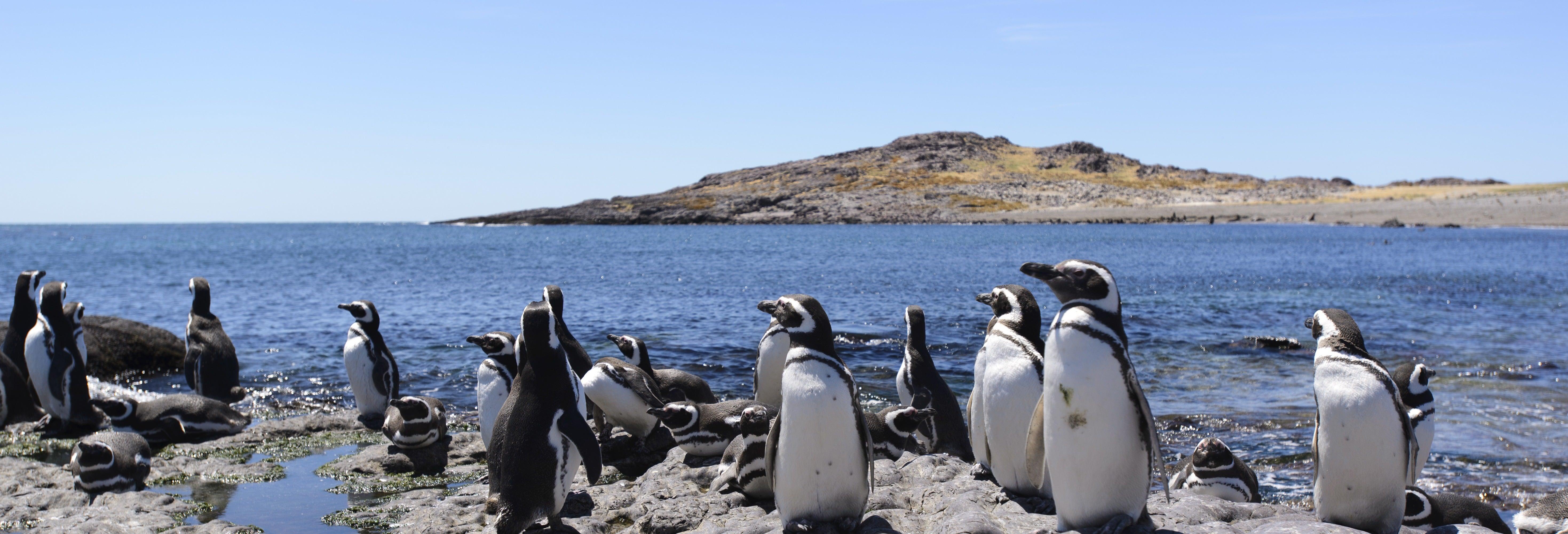 Avistamento de pinguins em Punta Tombo e Isla Escondida