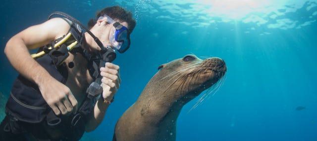 Buceo con lobos marinos en Punta Loma