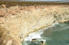 Snorkel con lobos marinos en Punta Loma