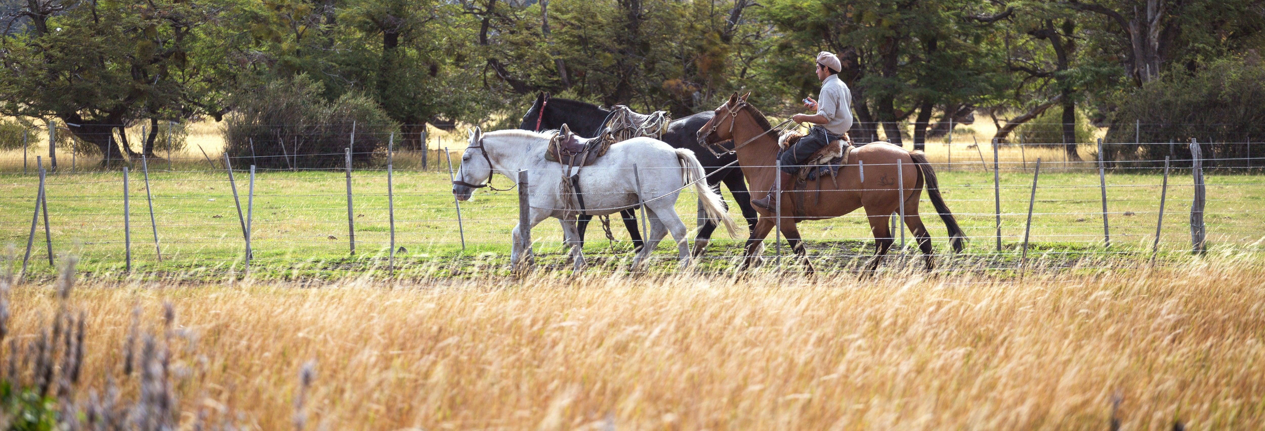 Paseo a caballo hasta El Naranjo