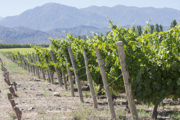 The vineyards of the Argentina province of San Juan