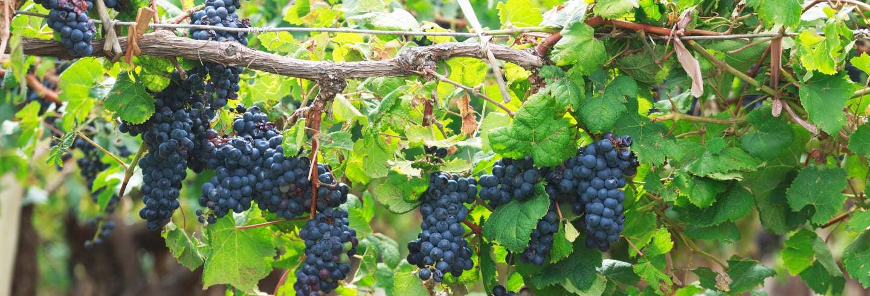 San Juan Winery Tour