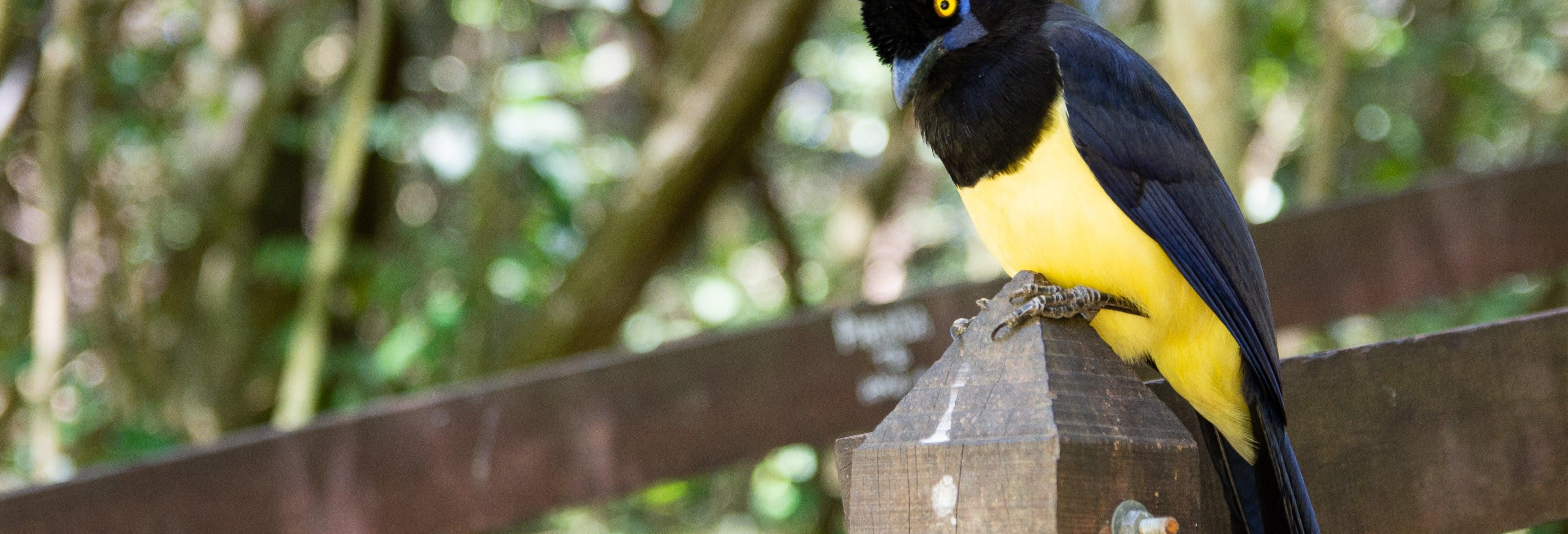 Excursión al Parque Nacional Calilegua