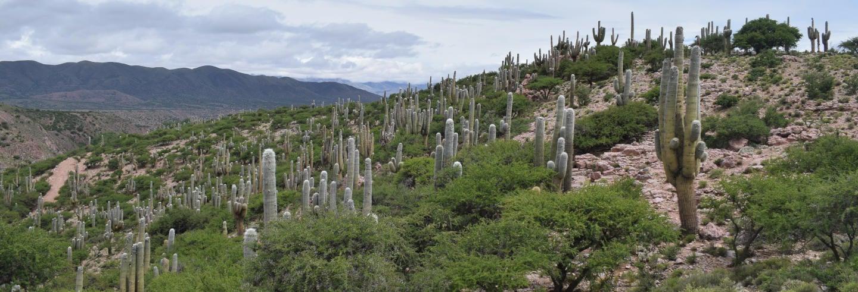 Excursión a la Quebrada de Sapagua + Comunidad de Hornaditas