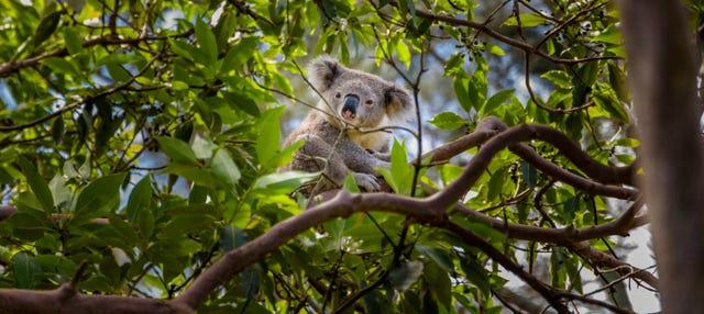 Australia Zoo Experience