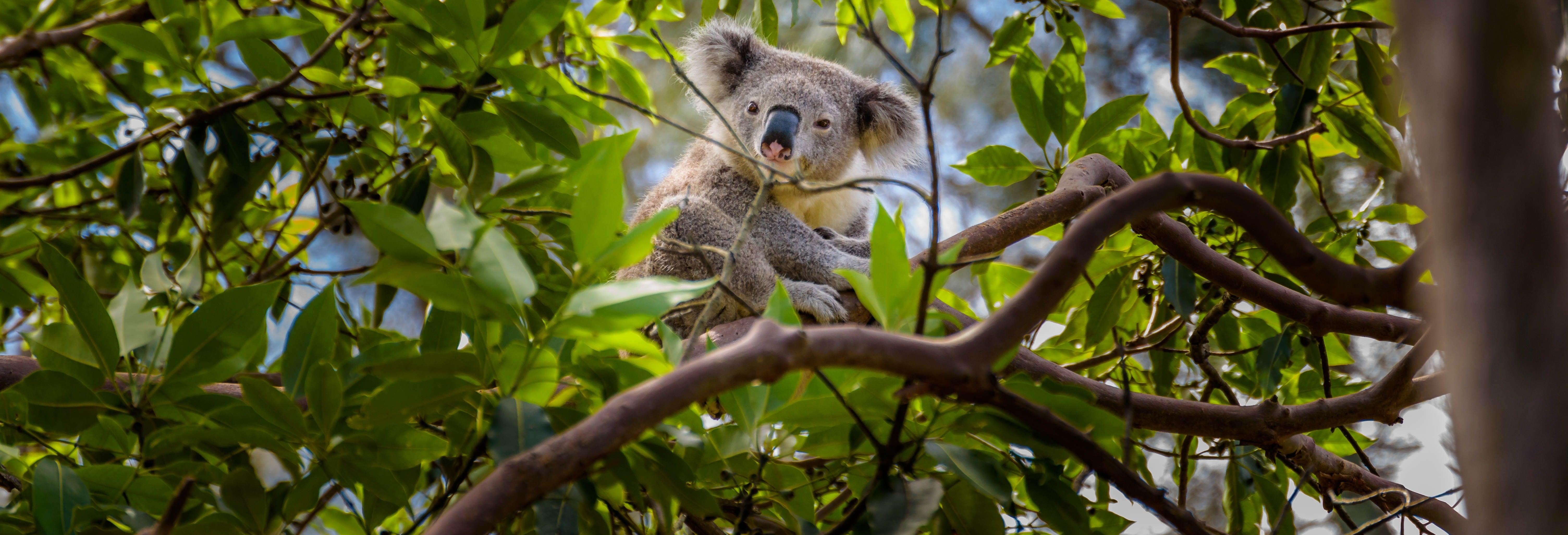 Escursione all'Australia Zoo