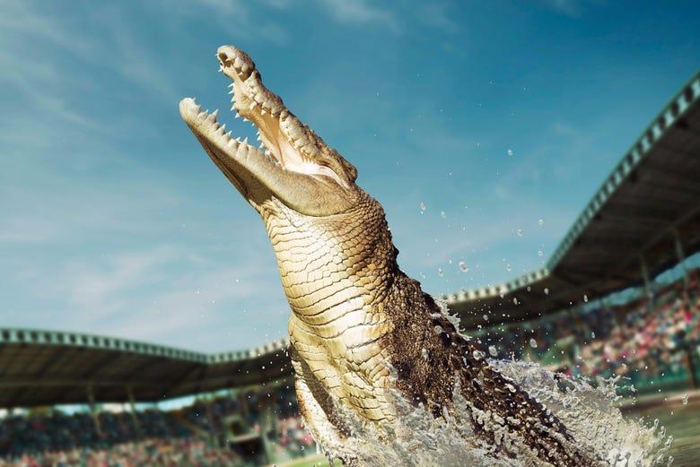 Excursión Al Australia Zoo Desde Brisbane Civitatis Com
