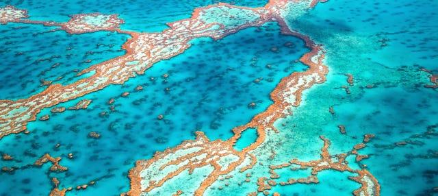 Excursión a la Gran Barrera de Coral y plataforma Marine World