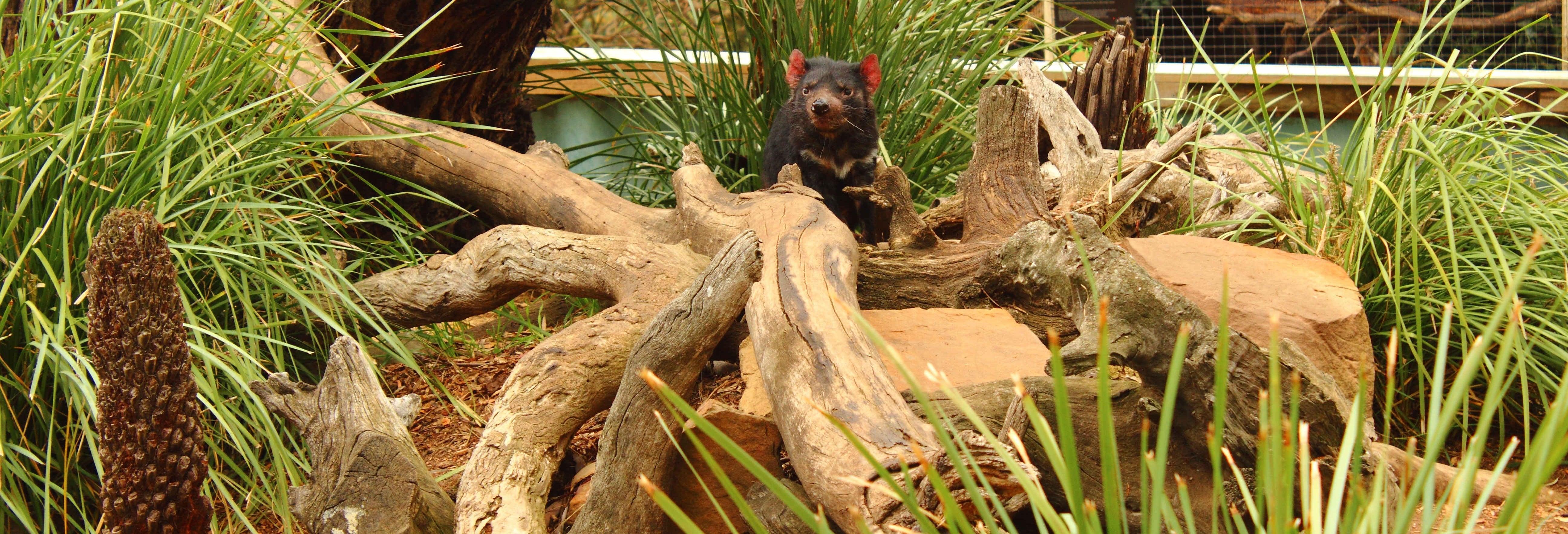 Excursión a Richmond y Bonorong Wildlife Sanctuary