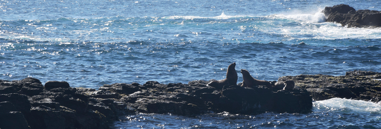 Avistamento de leões-marinhos