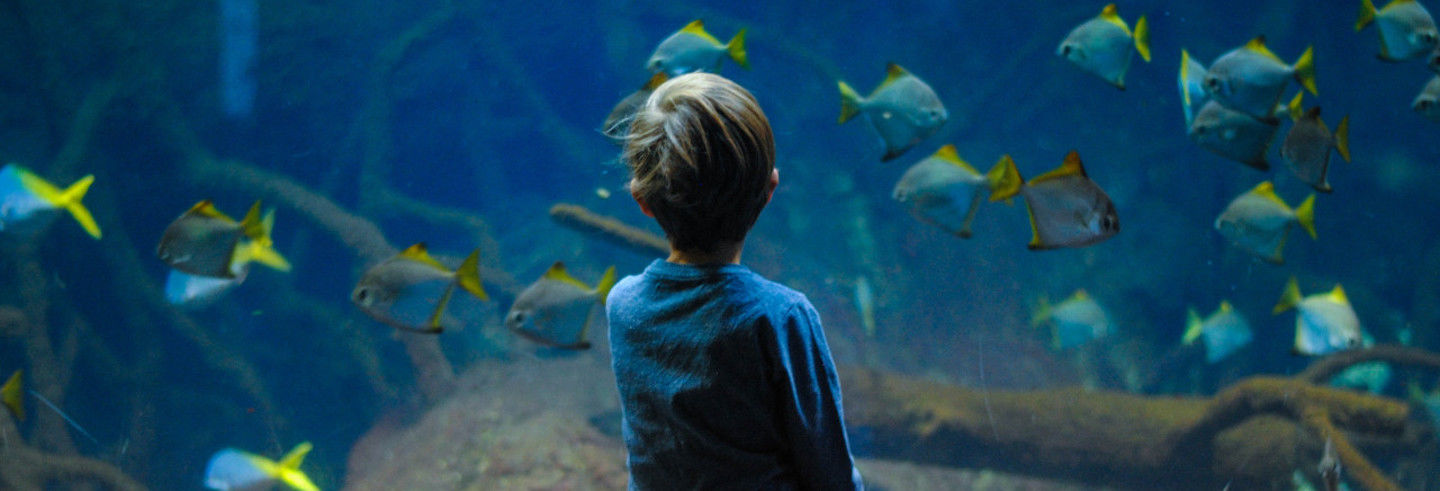 SEA LIFE® Melbourne Ticket