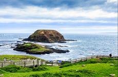 Excursión a la Isla Phillip