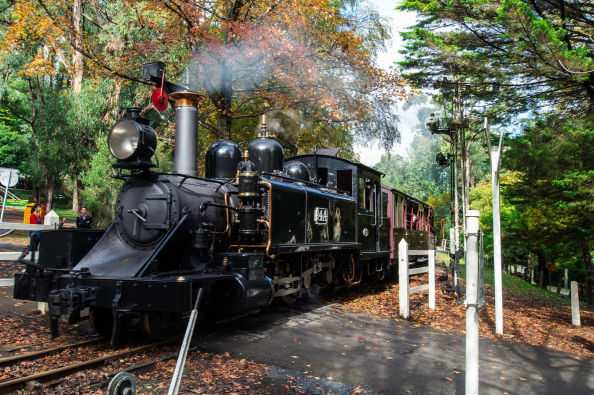 Treno Puffing Billy