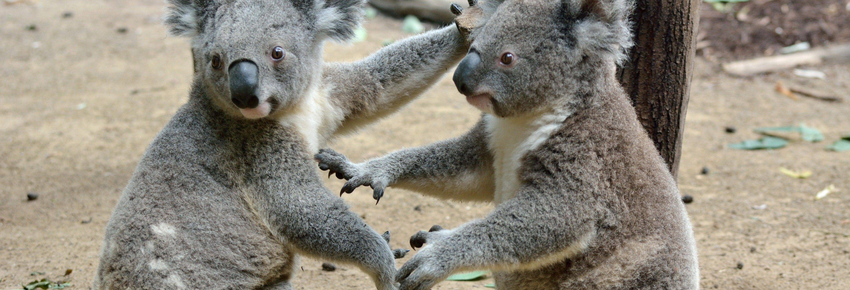 Excursion à Australia Zoo