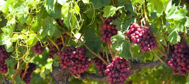 Tour do vinho por Swan Valley