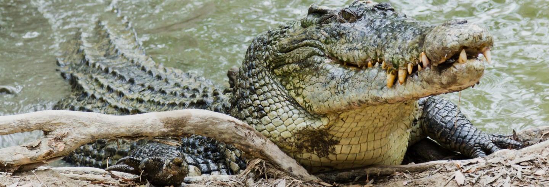 Excursión a Hartley's Crocodile Adventures