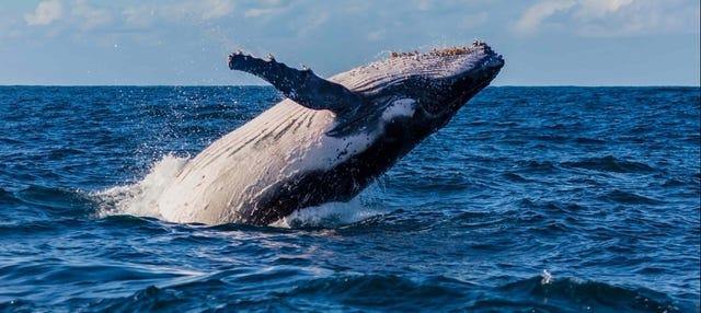 Avistamiento de ballenas en Sídney