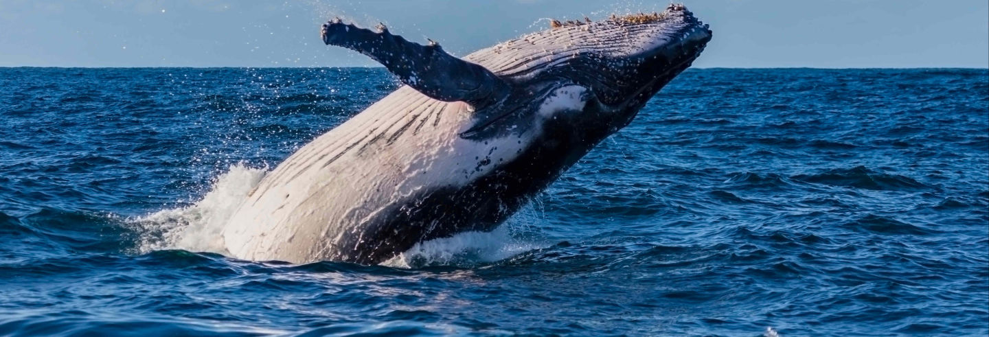 Sydney Whale Watching Tour