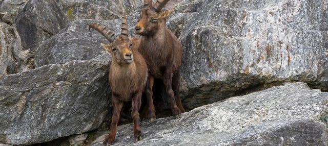 Biglietti per lo Zoo Alpino e funicolare Innsbruck-Hungerburg