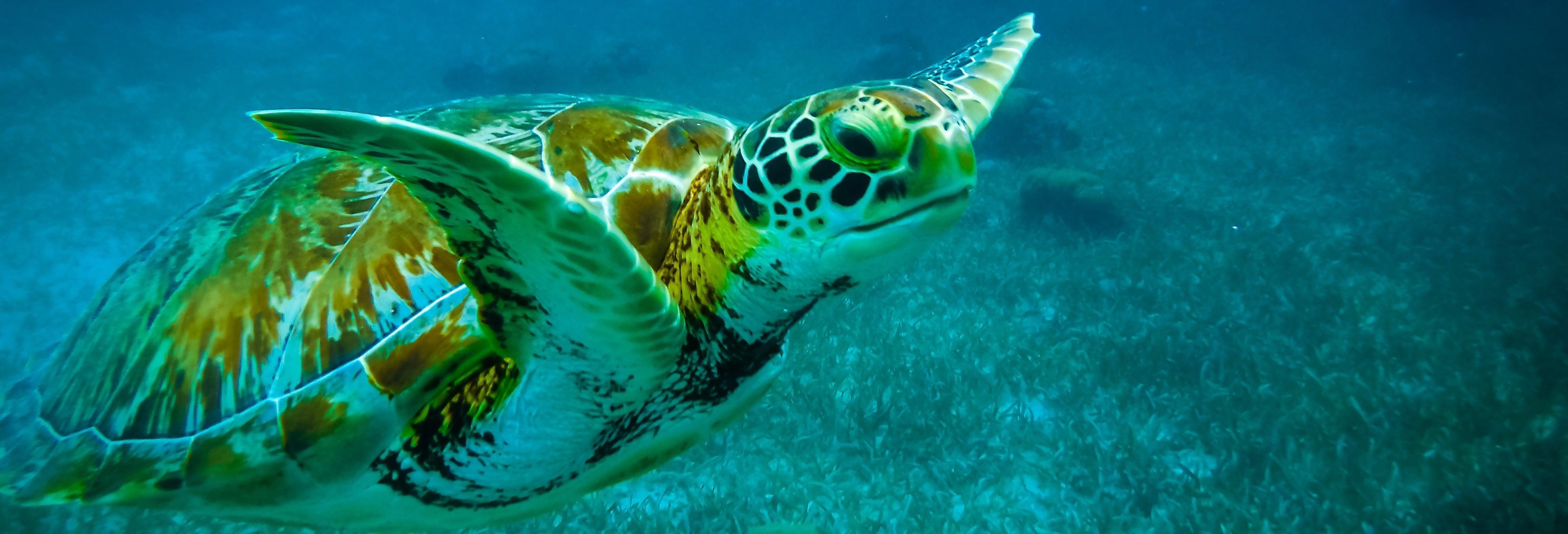 Snorkel em Caye Caulker