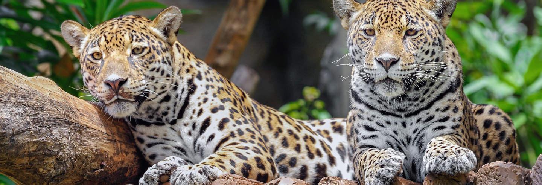 Excursión al Zoo de Belice y Santuario de Babuinos