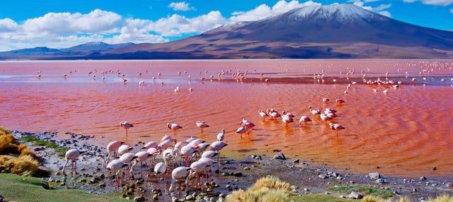 Tour de 4 días por Uyuni finalizando en La Paz