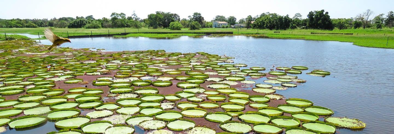 Tour por el canal do Jari