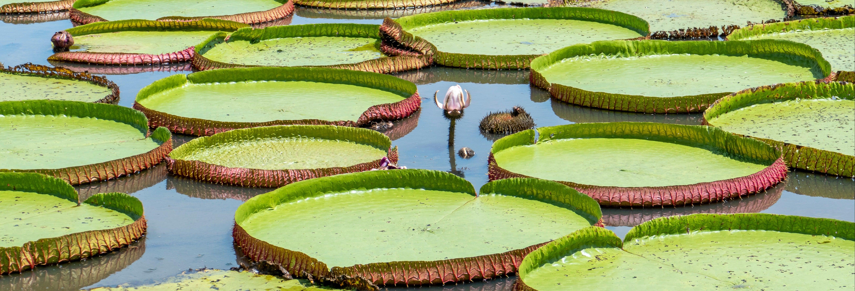 Tour por el lago do Maicá