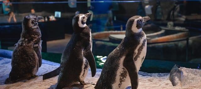 Ingresso do Oceanic Aquarium