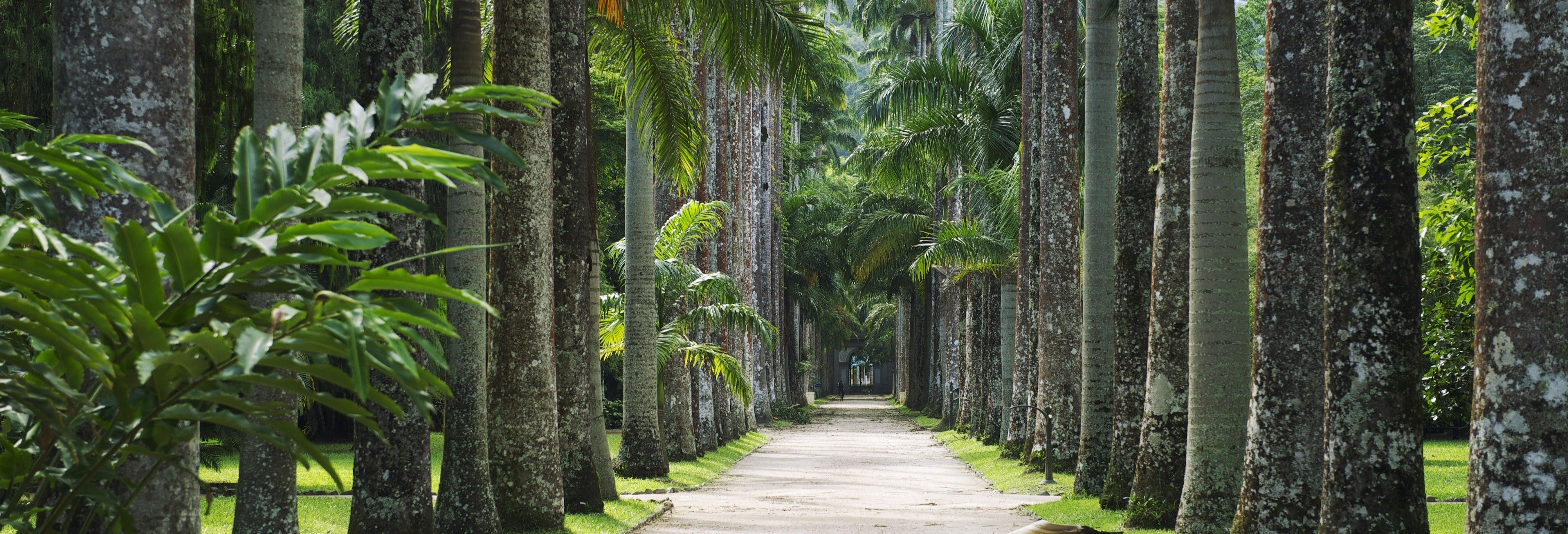 Botanical Garden + Tijuca Forest + Lage Park Tour