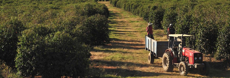 Excursão privada à fazenda Cana Verde