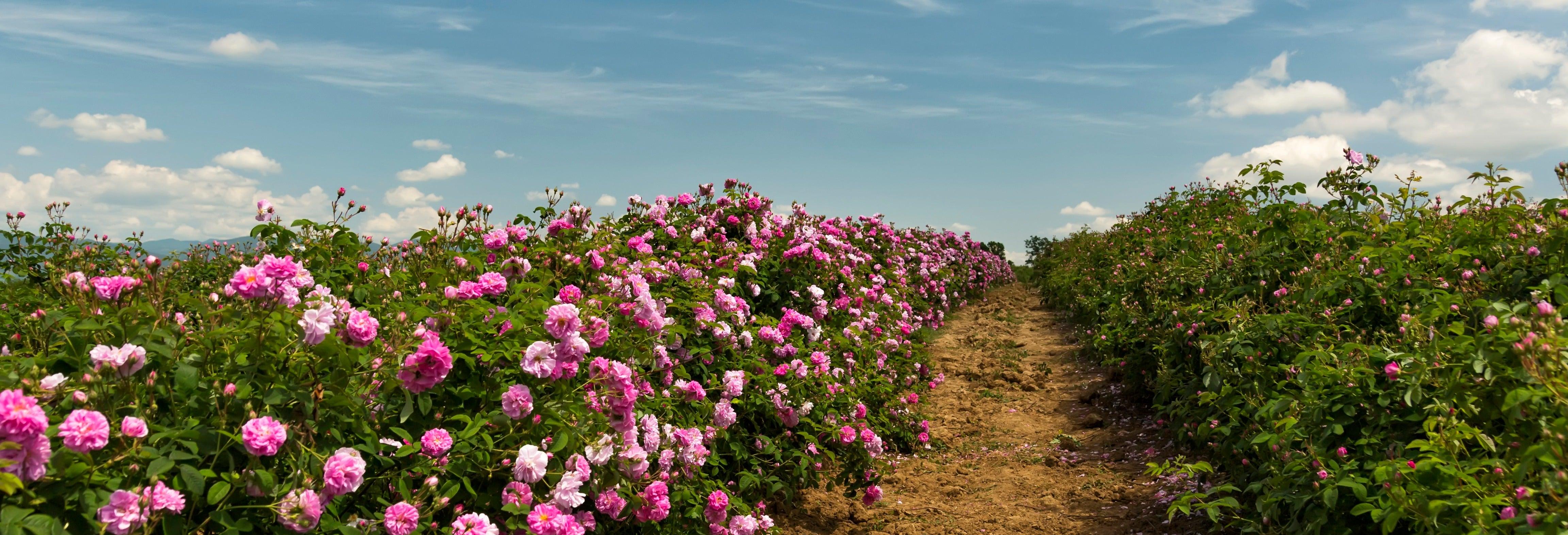 Escursione a Kazanlăk e alla Valle delle Rose