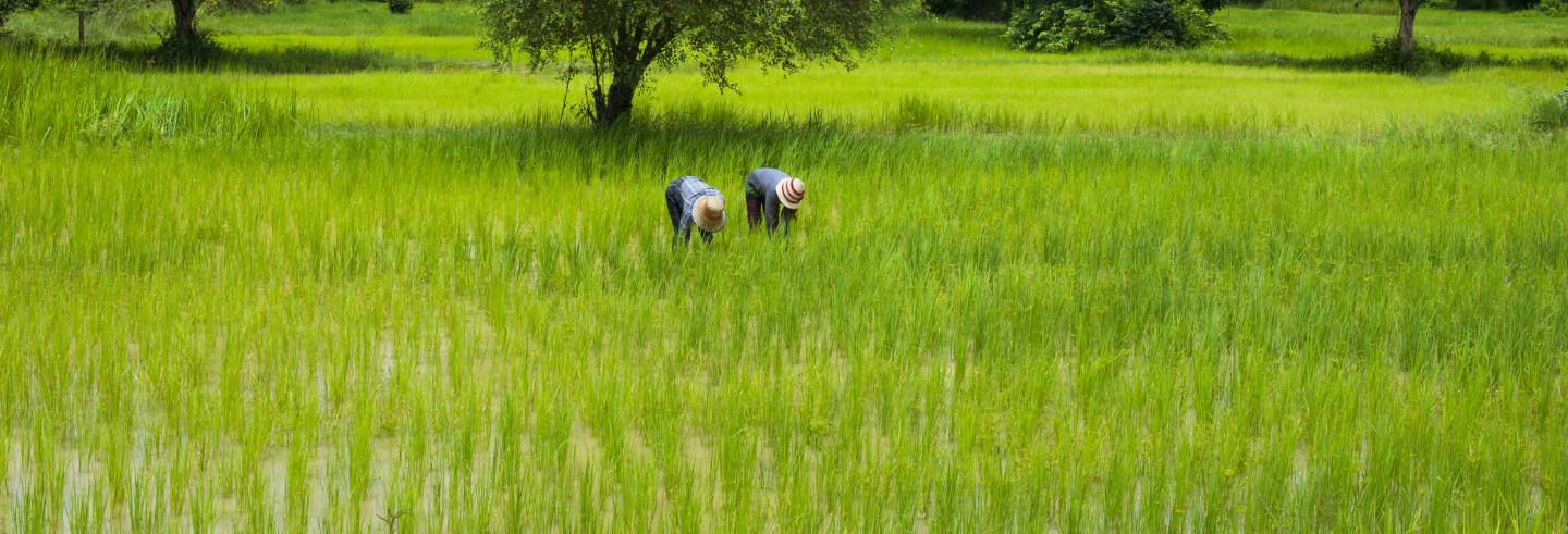 Tour de tuk tuk por Battambang