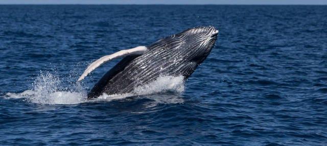 Avistamento de baleias no Parque Saguenay-Saint-Laurent