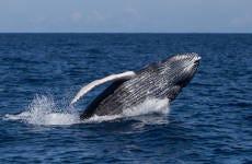 Avistamiento de ballenas en el Parque Saguenay-Saint-Laurent