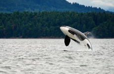 Circuito de 8 días por Canadá con avistamiento de ballenas