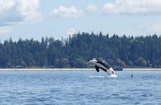 Excursión a Victoria con avistamiento de ballenas