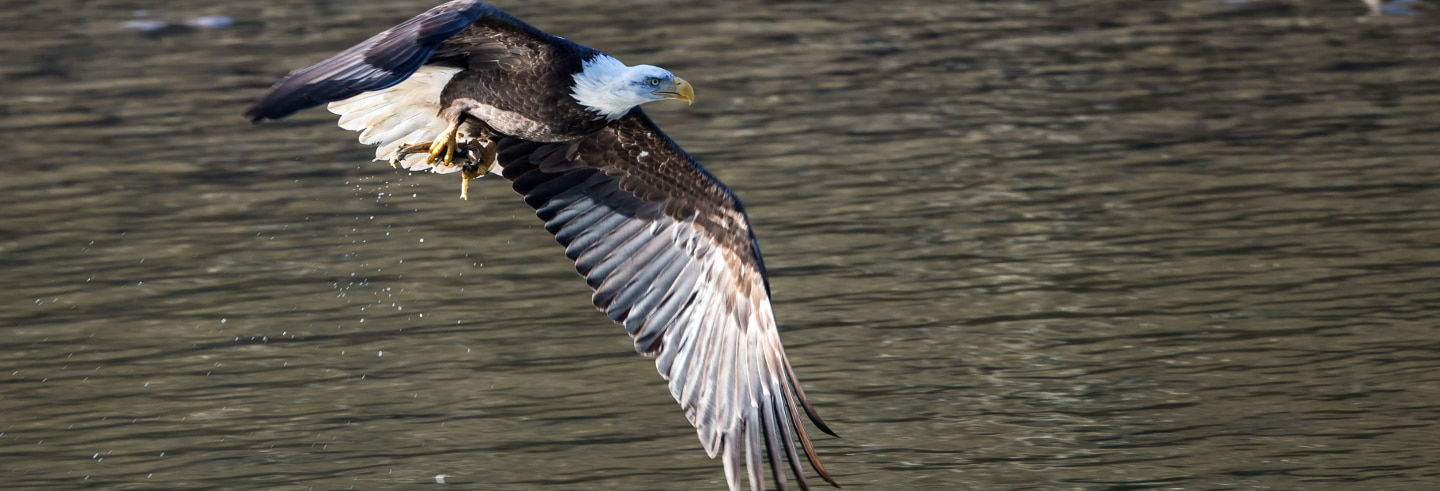 Eagle Watching Boat Trip